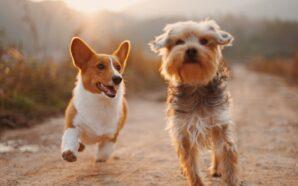 Sklep z dodatkami dla psów