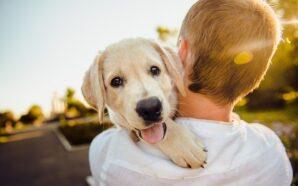 Kontrola urodzeń u domowych zwierząt – jak nad nią zapanować?